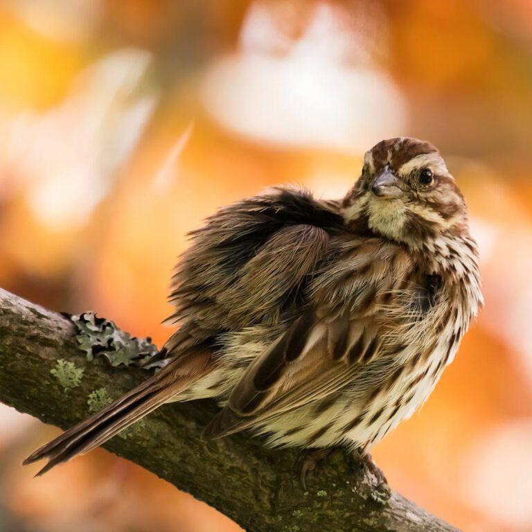 Als een kind zo blij als ik vanuit ons kantoorraam een mooi vogeltje spot in onze tuin.