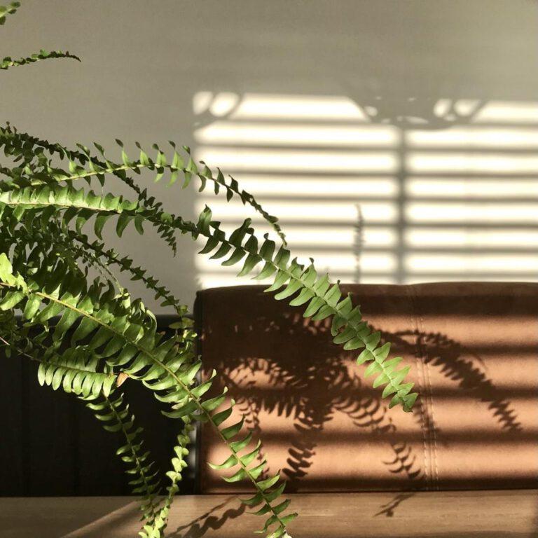 Die eerste zonnestralen in de lente; heerlijk! Tuindeur open en naar buiten.